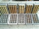 2 Molds Paper Pulp Egg Tray Making Machine Reciprocating Type Easy Operate